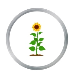 Sunflower icon cartoon single plant icon from the vector