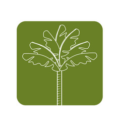 Label cute and exotic palm with leaves vector