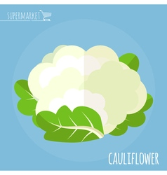 Cauliflower Long shadow flat design icon vector image vector image