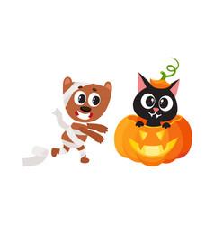 Flat cat sitting at pumpkin mummy dog vector