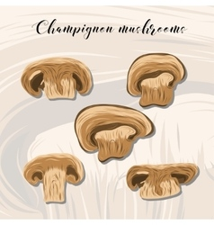 Fried champignon mushrooms on colourful background vector image