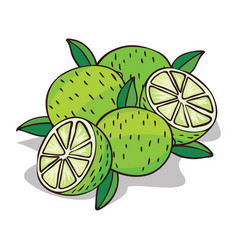 Isolate ripe lime fruit vector