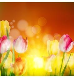 Tulip field under sunset sky eps 10 vector