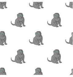 Scottish fold icon in cartoon style isolated on vector