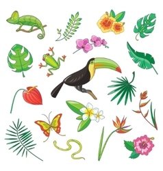 Tropical Plants and Animals Icon vector image vector image