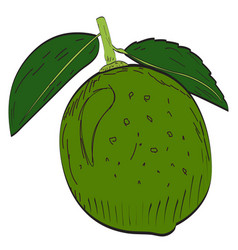 Isolated lemon vector