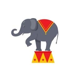 Circus elephant icon vector