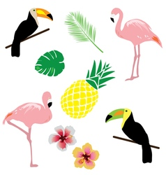tropical elements vector image