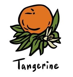 Tangerine fruit vector