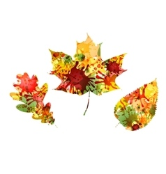 Autumn design of colorful leaves vector