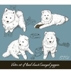 Vintage set with samoyed puppies vector