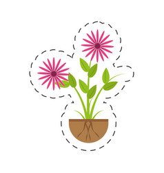 Aster flowers bunch flora growing vector