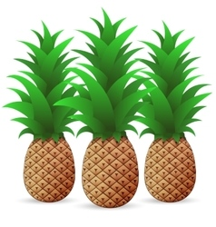 Bright color Pineapple vector image