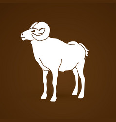 Sheep big horn ovis standing vector