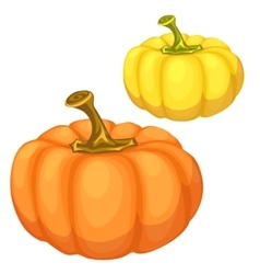 Yellow and orange pumpkin on a white background vector