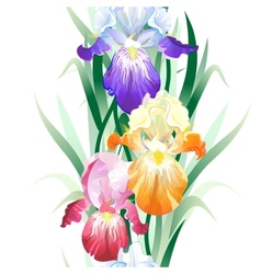 Seamless pattern with iris flowers vector
