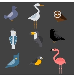 Birds set isolated vector