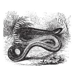 Slow Worm Vintage engraving vector image