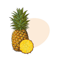 Whole unpeeled uncut vertical pineapple and vector