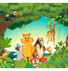 Animals in the forest vector image