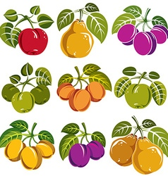 Set of ripe fruits and berries with green leaves vector image
