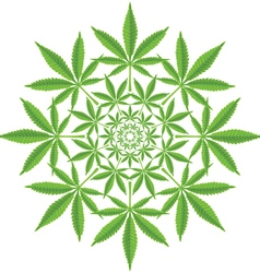 Round pattern from cannabis leaf vector image