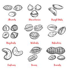 set of nuts design elements for poster menu vector image vector image