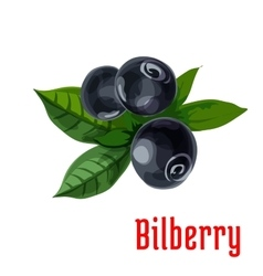 Blue bilberry fruit with green leaves cartoon icon vector