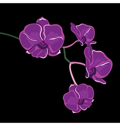 Floral pattern with orchids hand-drawing vector