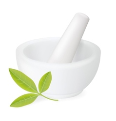 Healing herbs in white ceramic mortar vector image
