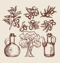 Olive oil in bottling olive tree and other hand vector