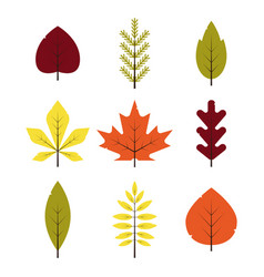 autumn different leaves set in flat style red vector image vector image