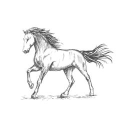 White horse with stamping sketch portrait vector image
