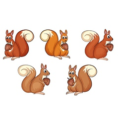 Squirrel eating vector image