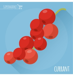 Red currant icon vector