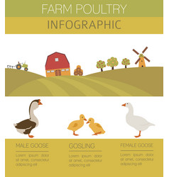 Poultry farming goose family isolated on white vector