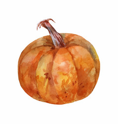 Ripe brown pumpkin watercolor painting side view vector