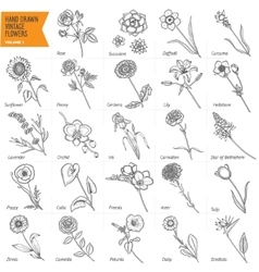 Hand drawn vintage flowers set pen graphic floral vector