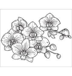 Beautiful monochrome floral bouquet of orchid vector