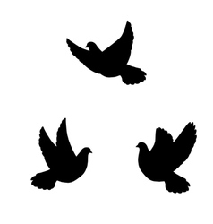 Isolated silhouette flying pigeons vector image