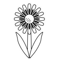 Daisy floral garden spring thin line vector