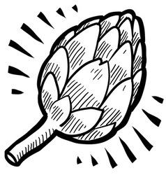 doodle artichoke vector image vector image