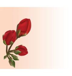 Realistic geranium flower vector