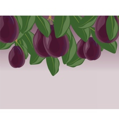 Plum fruits with leaves vector