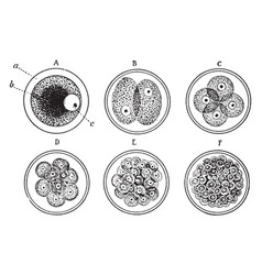 Cell development vintage vector