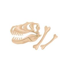Skull and bones of tyrannosaurus rex ancient vector