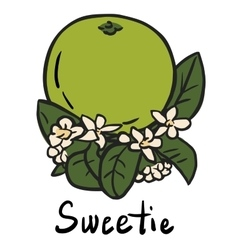 Sweetie fruit vector