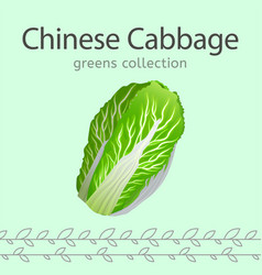 chinese cabbage image vector image vector image