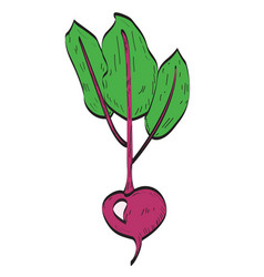 Isolated beet vector