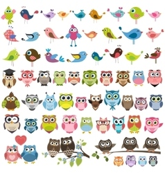 set of cartoon colorful birds and owls vector image